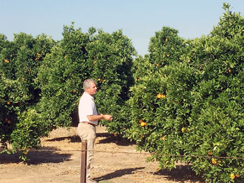 Umina Citrus Groves