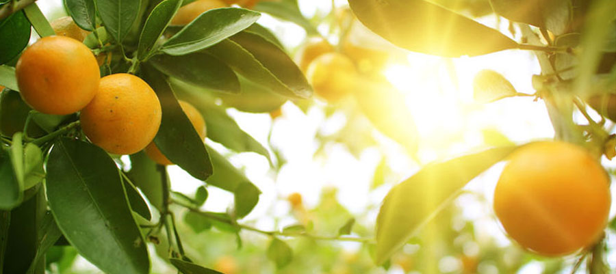 Fresh, Organic, Produce Distributors - Umina Brothers